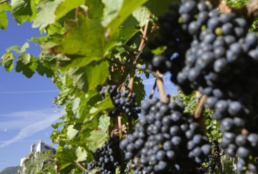 Weinwandern in Klausen